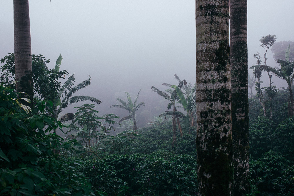 Vue de la rŽserve naturelle El Jaguar, au Nicaragua au petit matin.