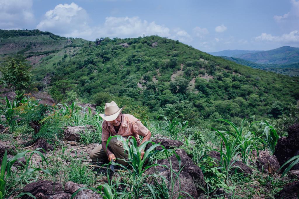 du côté du village d'Orocuina, la terre pentue de Margarito Alvarez, qui a mis ses beaux souliers noirs pour nous recevoir. Margarito, un monsieur d'un certain âge, maigre comme un clou, a perdu la plus grande partie de sa première récolte à la sécheresse. «La prochaine sera meilleure si Dieu le veut», dit-il tout simplement. Margarito Alvarez, 60 ans Pueblo de Orocuina Aldea de Combali